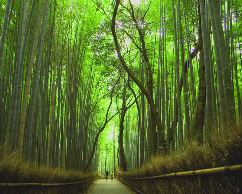 Kyoto-Japan-Forest - ready