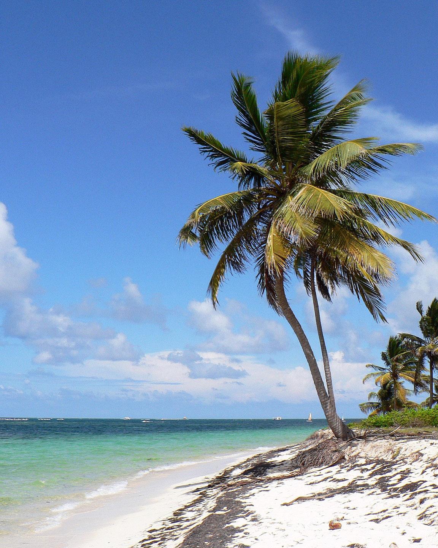 Очаквайте ново за 2020: Екзотична почивка в Доминикана – Пунта кана